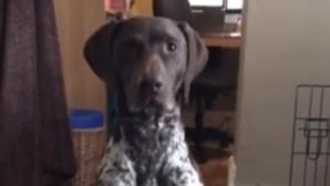 σκύλος γυμναστική