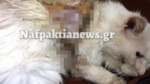 Η γατούλα που δέχθηκε επίθεση με οξύ