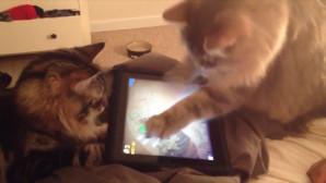 γάτες ipad