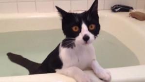 γάτα κάνει μπάνιο