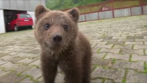 Aida-ορφανή αρκούδα