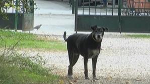 αδέσποτα σκυλιά στο νοσοκομείο Κιλκίς