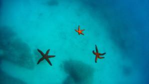 Αστερίες σε παραλία της Αττικής