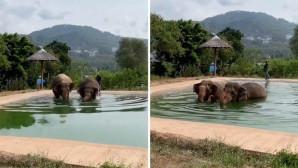 ελέφαντες πισίνα