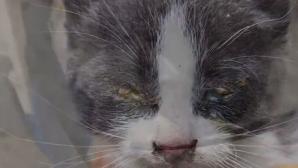 διάσωση γάτας