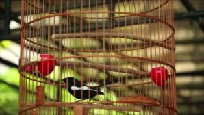 διαγωνισμός πουλιών
