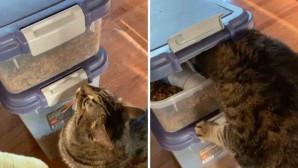γάτα ανοίγει τα κουτιά