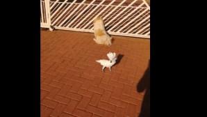 ο παπαγάλος με τους σκύλους
