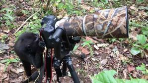 πίθηκος φωτογράφος
