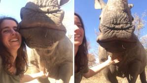 κορίτσι και ρινόκερος
