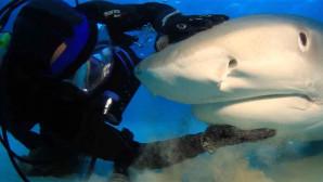 κολυμπάει μαζί με έναν καρχαρία