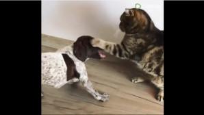 σκύλος και γάτα
