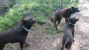 ακούνητα σκυλάκια