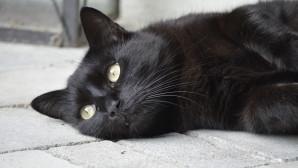 Ο αριθμός 13, μια μαύρη γάτα και ομπρέλα