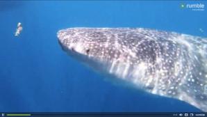 ο φαλαινοκαρχαρίας