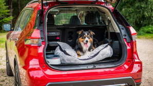 Nissan X-Trail Best Dog-Friendly Car of the Year  Sunday Times