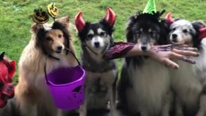 halloween σκυλιά