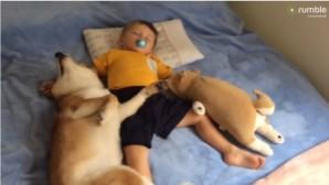το μωρό και το σκυλί