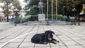 Αδέσποτος σκύλος στην κεντρική πλατεία των Τρικάλων