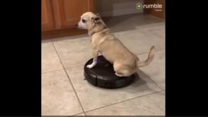 το σκυλάκι πάνω στη σκούπα