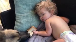 Σκύλος, βρέφος και σάντουιτς