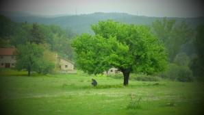 κρυφός κήπος- Ένη Κούκουλα
