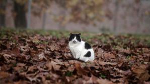 Γάτα στο δάσος