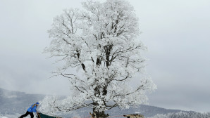 αγώνας σκύλων στα χιόνια