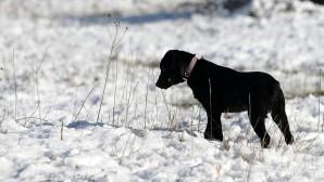 σκύλος στα χιόνια