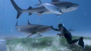 Δύτης και καρχαρίες