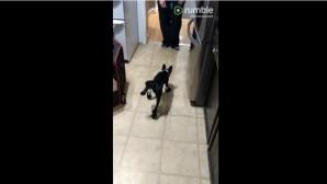 ο σκύλος με τα παπουτσάκια του