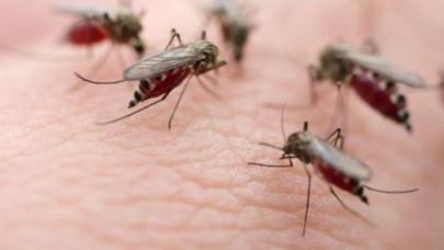 Νέα ανησυχία για το κουνούπι του Δυτικού Νείλου