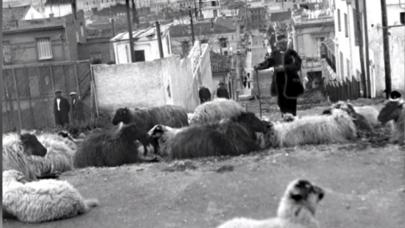 Πρόβατα στο Κολωνάκι