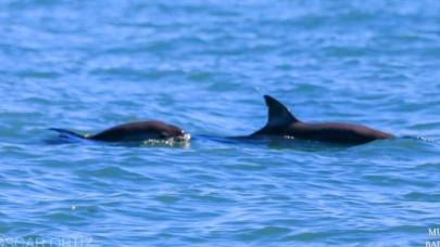 Εμφανίστηκε φώκαινα στα νερά του Μεξικού