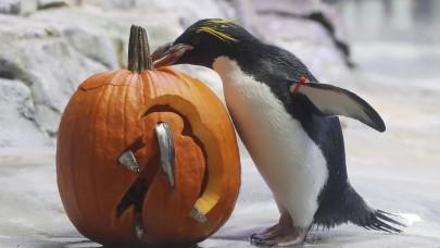 Πιγκουίνος σε ζωολογικό κήπο