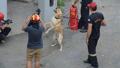 Ντροπή: «Ζητιανεύουν» για να ταΐσουν τα διασωστικά σκυλιά της ΕΜΑΚ Θεσσαλονίκης!