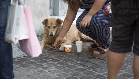 Ραφήνα: Σύλληψη 39χρονου επειδή κακοποίησε σκύλο