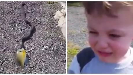 Φίδι κλέβει παιχνίδι μικρού αγοριού