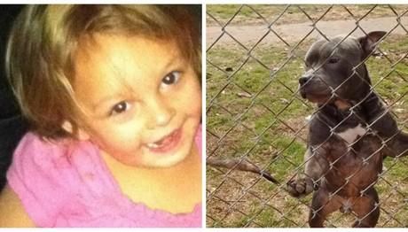 Πιτμπούλ κατασπάραξε 3χρονο κοριτσάκι - Ήταν δώρο από τον μπαμπά της μόλις πριν από πέντε μέρες
