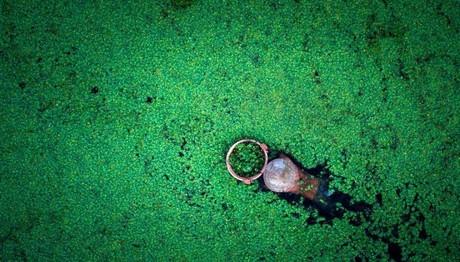 Φυτεύοντας βόλφιες στο Βιετνάμ