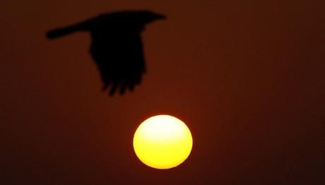 Ένα… πουλί «απογειώνεται» από τη βρετανική βάση