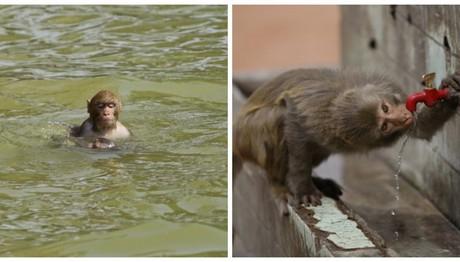 Ινδία: Μαϊμού άρπαξε μωρό μέσα από σπίτι -Νεκρό το βρέφος