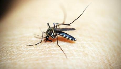 Καταπολέμηση , κουνουπια