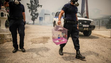 Φονικές πυρκαγιές: Η εικόνα του αστυνομικού που «έριξε» το διαδίκτυο
