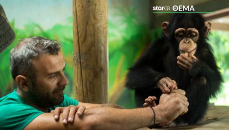 χιμπατζης ιασονας