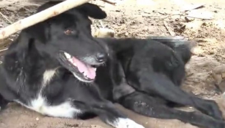 O σκύλος στην Ταϊλάνδη που έσωσε μωρό