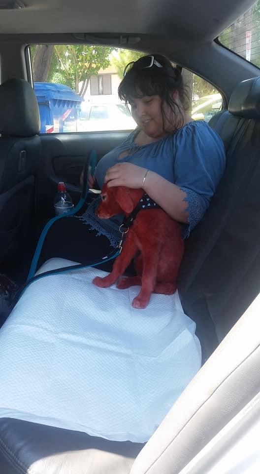 Υιοθετήθηκε το κόκκινο σκυλάκι