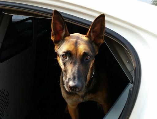 Αστυνομικός σκύλος έπαθε overdose από ηρωίνη σε έλεγχο φυλακών