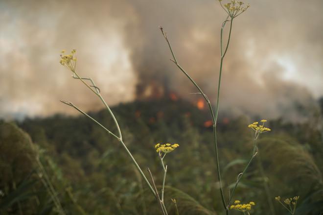 Πυρκαγιά Δαφνιώτισσα