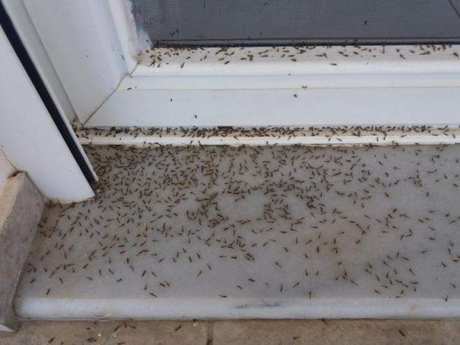 Aράχνες και κουνούπια στο Αιτωλικό